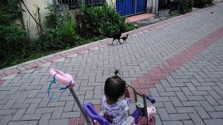 Outing Seru Aluna