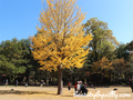 Trip To Korea Part II -Berkunjung ke Lokasi Shooting Winter Sonata : Nami Island - Dongdaemun Area-