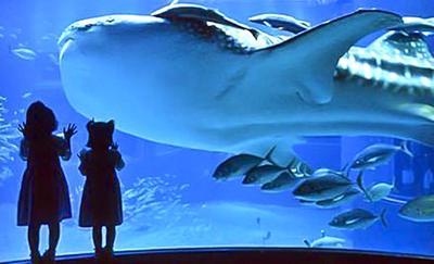 Chapter 18: The Aquarium