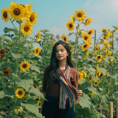 5 Taman Bunga Matahari yang Memesona di Indonesia