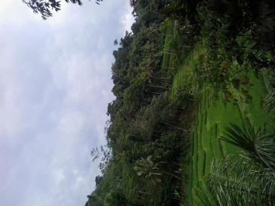 Keasrian dan kearifan lokal kampung Naga