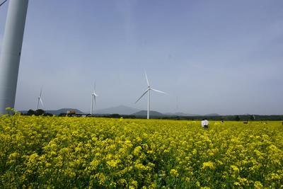 Jalan-jalan ke Pulau Jeju - season1 - (Pesawat VS Angin kencang Jeju)