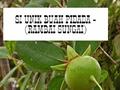 SI UNIK BUAH PIDADA - RAMBAI SUNGAI