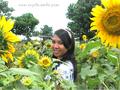 Indahnya Warna Warni Bunga di Taman Matahari Cinta Yogyakarta