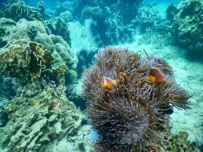 Pulau Pahawang,  Keindahan Alamnya Patut Kita Kunjungi Saat Berlibur